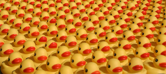 Entenrennen. Or as we knew it, Duck Race.